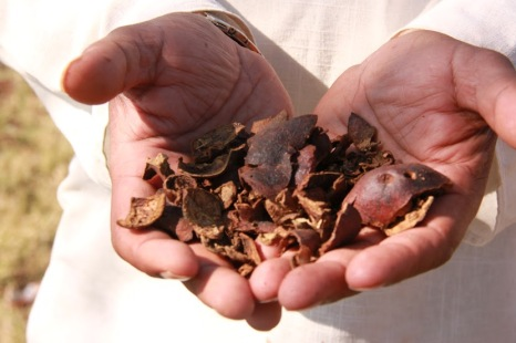 Dried Pomegranate Peels for the Typical Ajrakh Yellow
